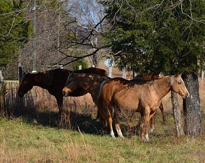 Shade Tree Horses - 51008441b  Poster by Paul Lyndon Phillips