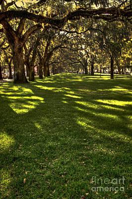 Shadows Of Emmet Park Savannah Poster by Reid Callaway