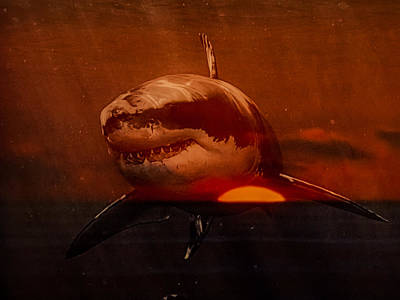 Shark In A Sunset Poster