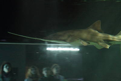 Shark - National Aquarium In Baltimore Md - 121212 Poster
