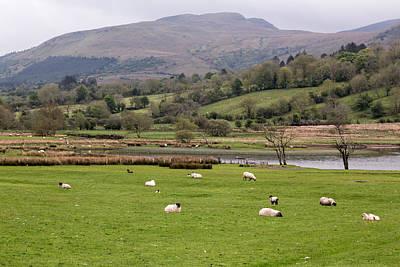 Sheep At Glencar Lake Poster by MaryGail Perkins
