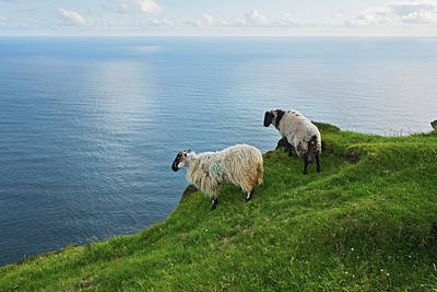 Sheep At Moyteoge Head Bei Dooagh Poster by Carl Bruemmer