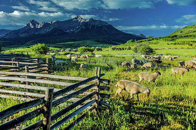 Sheep Graze On Hastings Mesa Poster