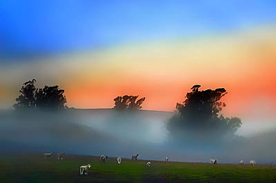 Sheep In The Early Morning Fog Poster by Wernher Krutein