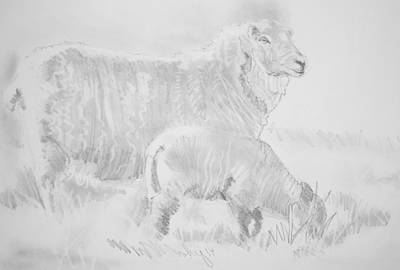 Sheep Lamb Pencil Drawing Poster