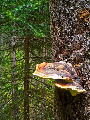 Shelf Fungus Along Cobb Lake Trail In Kootenay Np-bc Poster