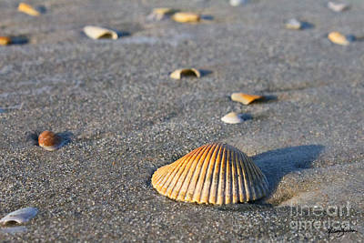 Poster featuring the photograph Shells 01 by Melissa Sherbon