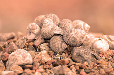 Shells In A Pile Poster by Tommytechno Sweden