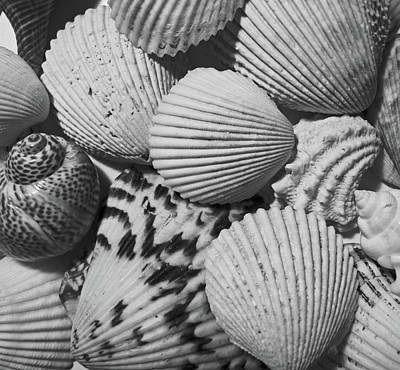 Shells In Black And White Poster by Mary Bedy