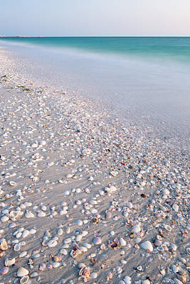 Shells In The Sand Poster by Adam Pender