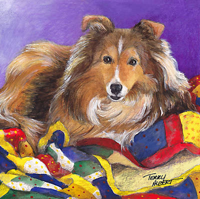 Sheltie On Quilt Poster