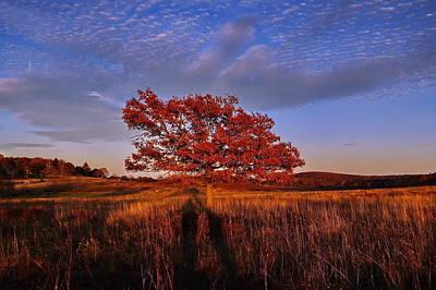 Shenandoah Tree Poster by Francie Davis
