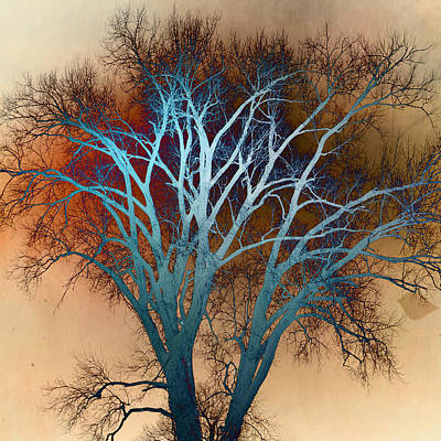 Shiny Tree Poster by Marty Koch