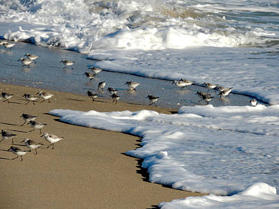 Shore Birds South Florida Poster