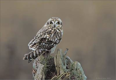 Poster featuring the photograph Short Eared Owl by Daniel Behm