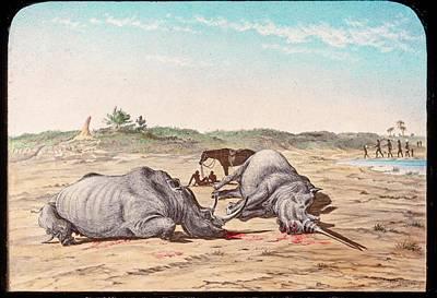 Shot White Rhinoceroses Poster