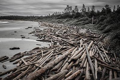 Shoved Ashore Driftwood  Poster