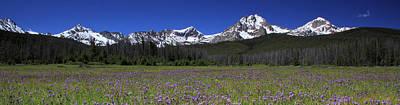 Showy Penstemon Wildflowers Sawtooth Mountains Poster