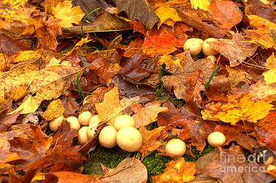 Poster featuring the photograph Shrooms by Jim McCain