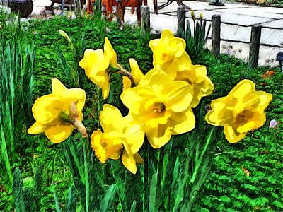 Shy Daffodils  Poster