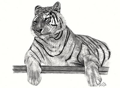 Siberian Tiger Poster by Patricia Hiltz