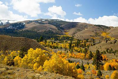 Sierra Foliage Poster