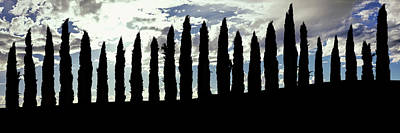 Silhouette Of Cypress Trees Poster