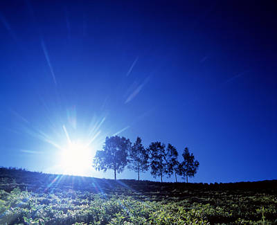 Silhouette With Trees In Sparse Field Poster by Panoramic Images