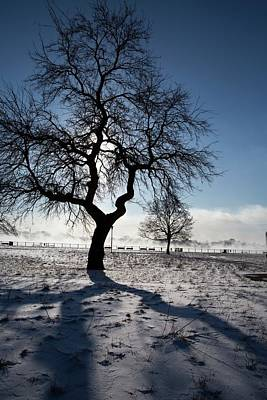 Silhouetted Tree In Winter Poster