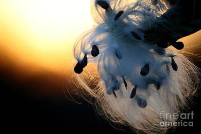 Silkweed Sunset  Poster by Neal Eslinger