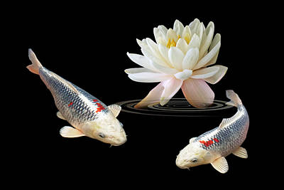 Silver And Red Koi With Water Lily Poster by Gill Billington
