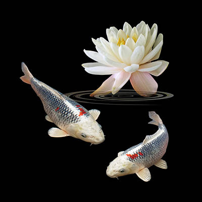 Silver And Red Koi With Water Lily Square Poster by Gill Billington