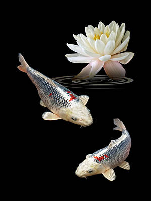Silver And Red Koi With Water Lily Vertical Poster by Gill Billington