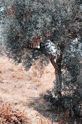 Silver Olive Tree. Nature In Alien Skin Poster by Jenny Rainbow