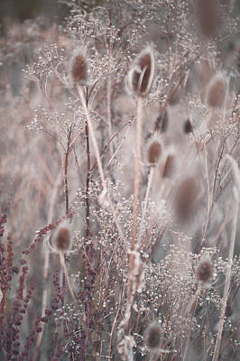 Silver Shades Of Wild Grass 2 Poster by Jenny Rainbow