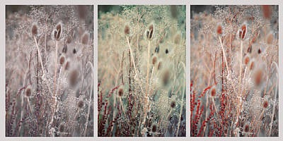 Silver Shades Of Wild Grass. Triptych Poster by Jenny Rainbow