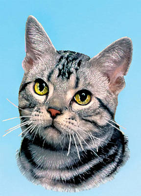Silver Tabby Kitten Original Painting For Sale Poster