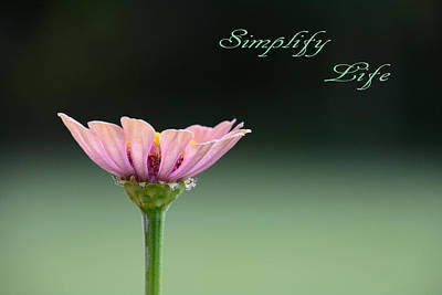 Poster featuring the photograph Simplify Life  by Jeanne May