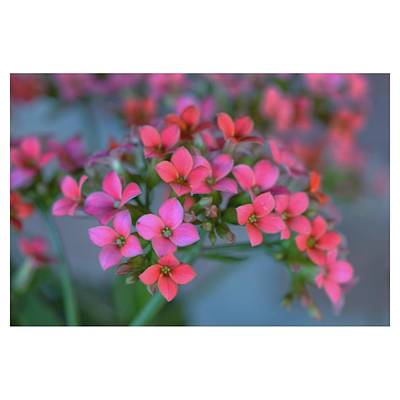 Simply Kalanchoe Poster