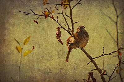 Poster featuring the photograph Singing Sparrow by Peggy Collins