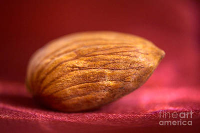 Single Almond On Red Poster by Iris Richardson