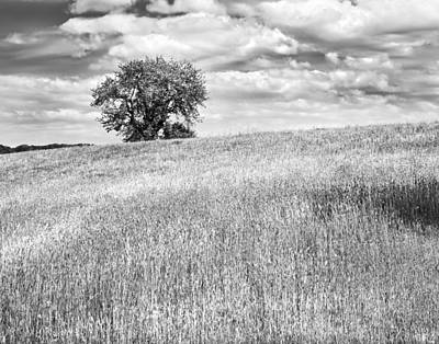 Single Apple Tree In Maine Hay Field Photograph Poster