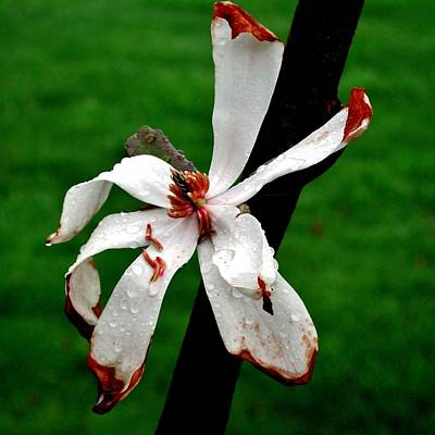 Single Flower Poster
