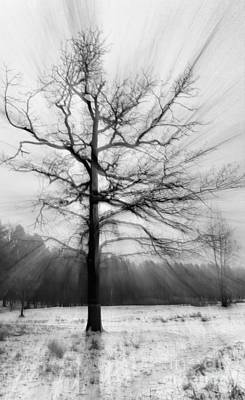 Single Leafless Tree In Winter Forest Poster