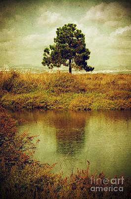 Single Pine Tree Poster by Carlos Caetano