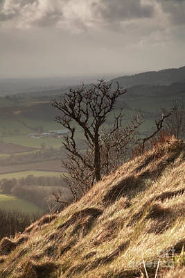 Single Tree Sutton Bank Poster