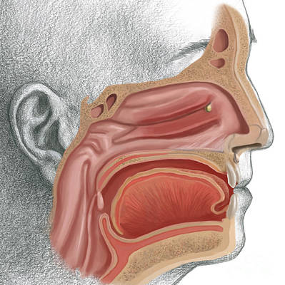 Sinus Infection Poster