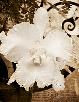 Sisterly Orchid Poster by Trish Tritz
