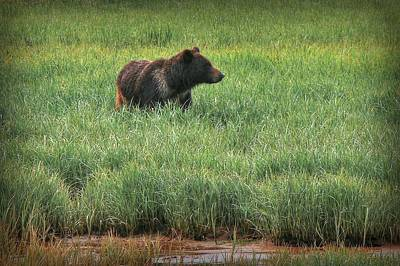 Sitka Grizzly Poster