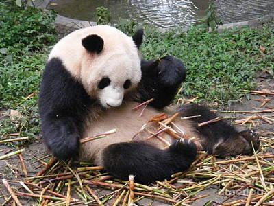 Playing Panda Poster by Noa Yerushalmi